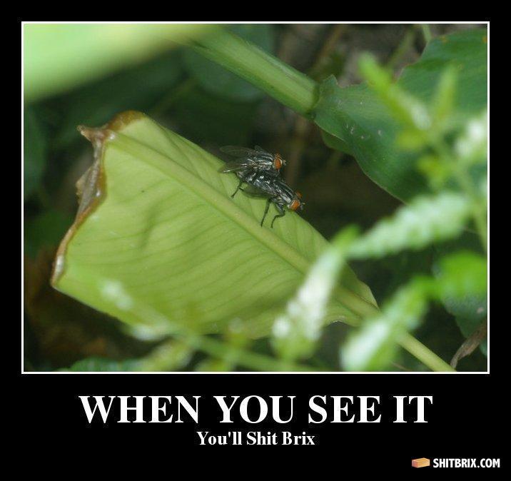 Fly Porn