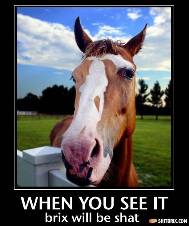 [Hình: horse-head-21220.jpg]